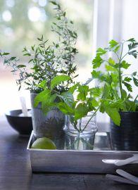 http://www.jardineria.pro